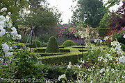 Nicotiana alata 'Grandiflora' and a white rose infront of the Buxus - box parterre - September