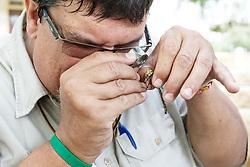 Holding and examining green darner dragonfly with magnifying glass,  Mitchell Lake Audubon Center, San Antonio, Texas, USA.