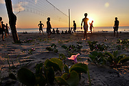 Early morning on a part of China beach in Danang. Silhouettes of men playing volley-ball on the beach. A pink flower in the foreground is in focus and a sunbeam highlights it while there is shade all around.