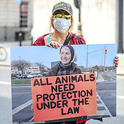 Dozens of Canadian and British animal rights activists are protesting in front of Canada House in London, on Friday, June 26, 2020 - against a law brought by the Ontario government known as Bill 156.<br /> Activists also mourned the death of Canadian citizen and animal rights activists Regan Russell (65), who was struck and killed by the truck driver on the morning of Friday, June 19, 2020 - while she was peacefully attending an event outside Fearmans Pig Slaughterhouse in Burlington, Ontario, as part of Toronto Pig Save activism. (Photo/ Vudi Xhymshiti)