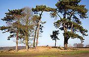 Brightwell Heath tumulus bowl barrow burial mound, Pole Hill, Foxhall, near Ipswich, Suffolk, England, UK