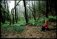16: CANARY ISLANDS LA GOMERA CENTRAL FORESTS