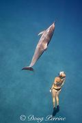 Emily Sepeta swims with a Hawaiian spinner dolphin or Gray's spinner dolphin, Stenella longirostris longirostris, at Ho'okena Beach, South Kona, Hawaii ( the Big Island ), USA ( Central Pacific Ocean ) MR 491