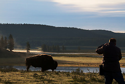 Photographer photographs a bull bison in the Hayden Valley beside the Yellowstone as sunrise.