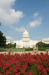 Washington DC; USA: The Capitol Building, legislative branch of the US government, with red flowers.Photo copyright Lee Foster Photo # 3-washdc83031