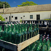 South America, Uruguay; Florida, winery, Wine bottles being re-used and re-filled.