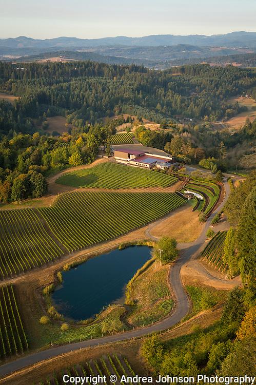 Elk Cove's Mt. Richmond Vineyard, Yamhill, Willamette Valley, Oregon