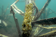 Fishiding Artificial Fish Attractors-After 2 years, organic growth is abundant on the panels.<br /> <br /> Engbretson Underwater Photography