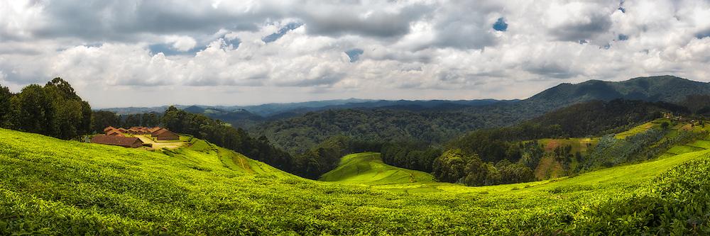 Tea plantation nearby Mudasomwa in Nyungwe Forrest Nationalpark, Rwanda. This picture is a highresolution panorama stitched by 5 exposures   Teplantasje i nærheten av Mudasomwa i Nyungwe Forrest Nationalpark, Rwanda. Dette bildet er et høyoppløslig panorama sett sammen av 5 eksponeringer.
