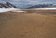 Bear prints from a subadult brown bear crossing the pyroclastic flow of ash in The Valley of Ten Thousand Smokes, Katmai National Park, Alaska.
