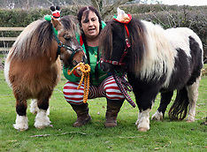 Island Riding Horse Christmas
