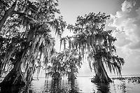Everglades Gallery Evergldaes johnbobcarlos johnbob Florida Lakes