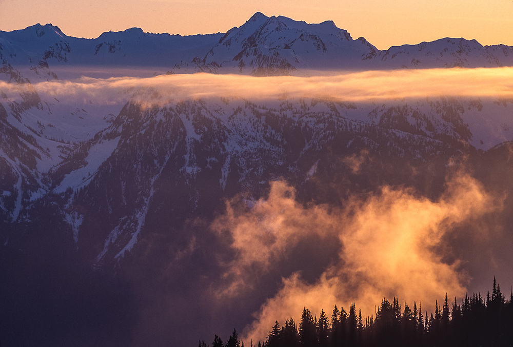 Mount Carrie viewed from Hurricane Ridge evening light, winter, Olympic National Park, Washington, USA