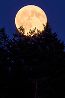 Full moon rising, Drumbeg Provincial Park Gabriola, British Columbia Canada, September 2008