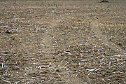 tractor wheel tracks on a bare crop field during fall season
