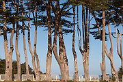 Cypress Trees, Point Arena Odd Fellows Cemetery, California Coast, Mendocino County, gray tree trunks, open sky, Pacific Ocean, ocean shores, Point Arena CA, white picket fence, grave markers