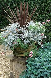 Stone container with Cordyline australis, Senecio cineraria 'Silver Dust', Diascia 'Salmon Pink' and Verbena 'Pink Parfait'