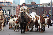 """SHOT 1/15/08 1:24:57 PM - Cowboys drive Texas Longhorn Cattle through the streets of Downtown Denver Tuesday January 15, 2007 during the National Western Stock Show Parade. The National Western Stock Show is held every January at the National Western Complex in Denver, Colorado. First held in 1906, it is the world's largest stock show by number of animals and offers the world?s only carload and pen cattle show in the historic Denver Union Stockyards. The stock show is governed by the Western Stock Show Association, a Colorado 501 (c) 3 institution, which produces the annual National Western Stock Show in an effort to forward the association's mission: """"To preserve the western lifestyle by providing a showcase for the agricultural industry through emphasis on education, genetic development, innovative technology and offering the world's largest agricultural marketing opportunities."""" The Super Bowl of livestock shows, National Western hosts 20 breeds of cattle, horses, sheep, swine, goats, llamas, bison, yak, stock dogs, poultry and rabbits. The 2008 National Western runs from January 12-27 this year..(Photo by Marc Piscotty / © 2008)"""