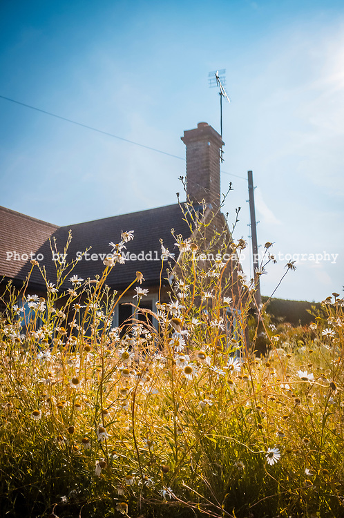Wild flowers growing outside old farmhouse