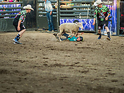 "26 JUNE 2019 - CENTRAL CITY, IOWA: A rider falls off a sheep during the ""Mutton Bustin' "" contest at the Linn County Fair. Mutton Bustin' is an event for young children. They ride sheep bareback for six seconds. Summer is county fair season in Iowa. Most of Iowa's 99 counties host their county fairs before the Iowa State Fair, August 8-18 this year. The Linn County Fair runs June 26 - 30. The first county fair in Linn County was in 1855. The fair provides opportunities for 4-H members, FFA members and the youth of Linn County to showcase their accomplishments and talents and provide activities, entertainment and learning opportunities to the diverse citizens of Linn County and guests.    PHOTO BY JACK KURTZ"