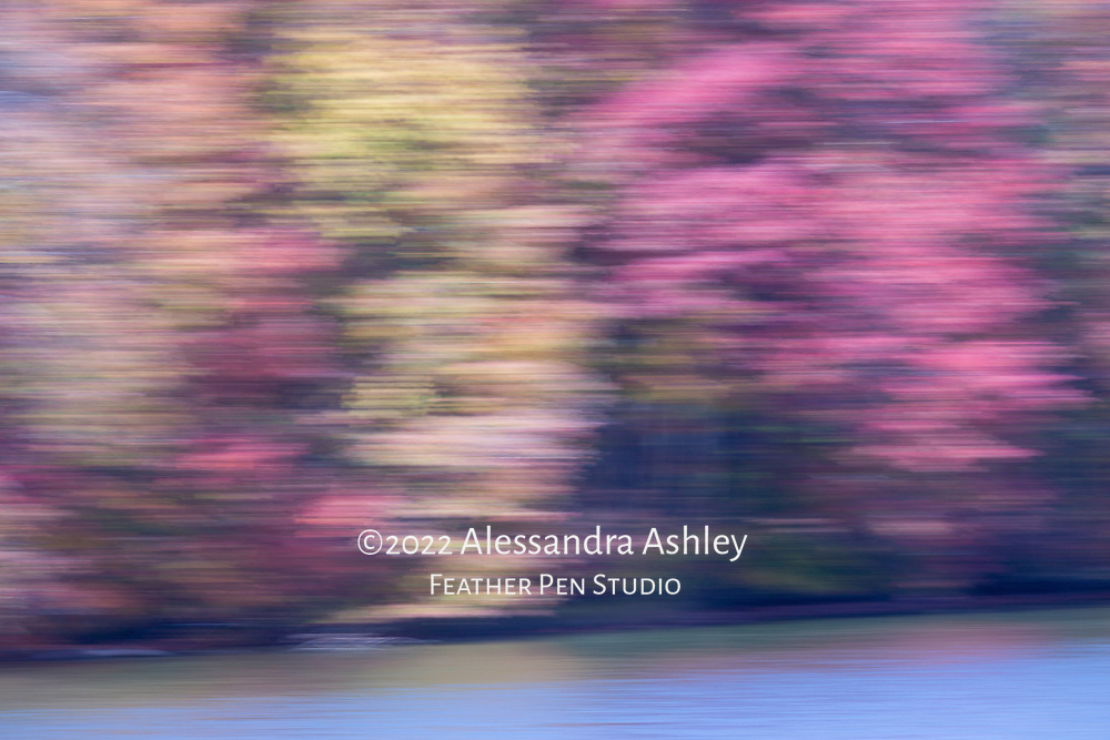 Shoreline of Clear Fork Reservoir in autumn, captured with in-camera impressionistic blur. Cooltone version.