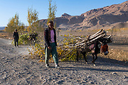 Boys bringing their Donkey carrying some trees home, Yaklawang, Afghanistan