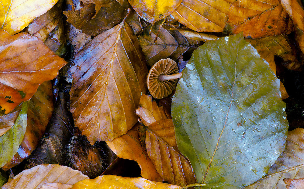 Group of leaves in autumn colors, details of the wood