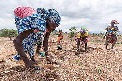 30 May 2019, Mokolo, Cameroon: 13-year-old Mairamou Zra and her family work their field, sowing groundnut near the Minawao camp for Nigerian refugees. From the village of Gadala, the family forms part of the host community in the area around the camp. The Minawao camp for Nigerian refugees, located in the Far North region of Cameroon, hosts some 58,000 refugees from North East Nigeria. The refugees are supported by the Lutheran World Federation, together with a range of partners.