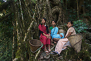 Khasi woman & Living bridges<br /> Nongriat, Khasi Hills<br /> Meghalaya, ne India<br /> Range: South China, NE India, Burma
