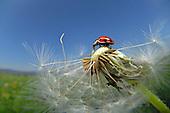 Invertebrates - terrestrial | Wirbellosetiere I