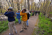 bird watchers and photographers on forested trail looking and photographing for birds during the annual spring migration near Leamington <br /> Point Pelee National Park<br /> Ontario<br /> Canada