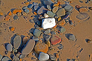Pebbles of different rock types at Spurn Head, Yorkshire, England