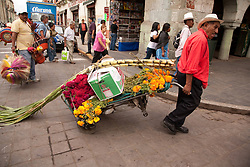 North America, Mexico, Oaxaca Province, Oaxaca, man wheeling flowers and sugar cane through street during Day of the Dead (Dias de los Muertos) celebration