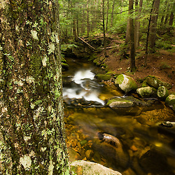 Moose Brook at Moose Brook State Park in Gorham, new Hampshire.