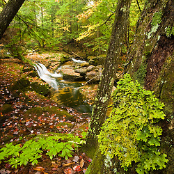 A tributary of the Baker River cascades through a hemlock forest in Groton, New Hampshire.