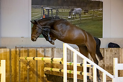 Novack de Virton, Van Mechelen Lies<br /> The Special Free Jump Contest - Lubbeek 2021<br /> © Hippo Foto - Dirk Caremans16/10/2021
