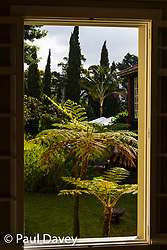Morning sunshine illuminates subtropical ferns in the gardens of the Quinta Jardins da Lago hotel in Funchal, Madeira. MADEIRA, September 25 2018. © Paul Davey
