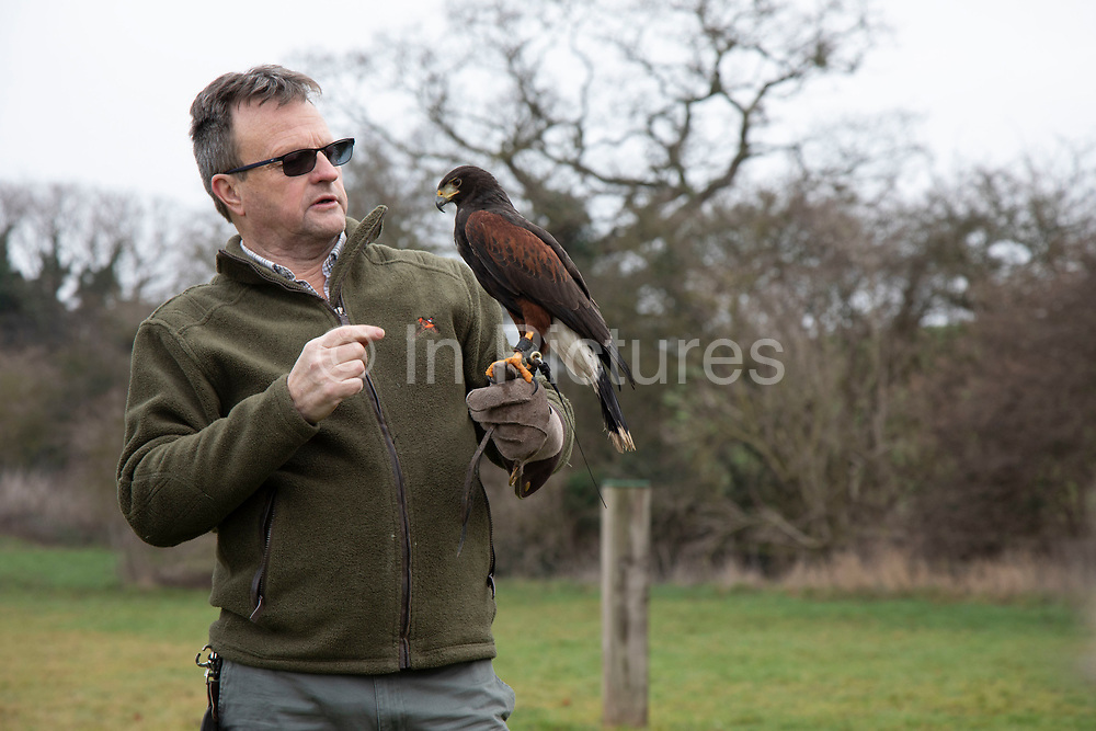 Birds of prey on show during a falconry display near Stratford-upon-Avon, England, United Kingdom. Here a Harris Hawk is on the falconers glove.