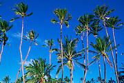 Coconut Grove<br />