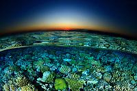20/Noviembre/2019. Egipto. Mar Rojo.<br /> Arrecife de coral fotografiado al atardecer en Jackson reef.<br /> <br /> © JOAN COSTA
