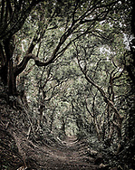 A trail through the woods in St KItt's.