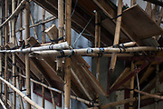 A detail of a major contruction work in Mid-levels. Scaffolds in Hong Kong are made of bamboo poles tied together.