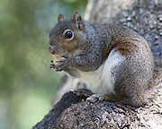 Image of a squirrel in Bienville Square.