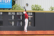 21 May 2016: Louisville's Drew Ellis fails to catch a home run ball by Wake Forest's Stuart Fairchild (not pictured). The Wake Forest University Demon Deacons played the University of Louisville Cardinals in an NCAA Division I Men's baseball game at David F. Couch Ballpark in Winston-Salem, North Carolina. Louisville won the game 9-4.