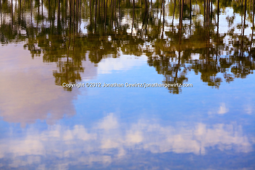 Blurred reflections of trees and sky on the surface of the pond at the Long Pine Key campground in Everglades National Park, Florida. WATERMARKS WILL NOT APPEAR ON PRINTS OR LICENSED IMAGES.