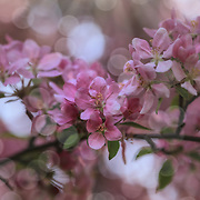 """Dance of the Fairies""<br />
