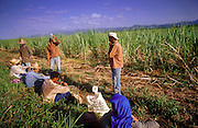 23 JULY 2002 - TRINIDAD, SANCTI SPIRITUS, CUBA: Macheteros (literally machete men but colloquially men who work with machetes) prepare to cut sugar cane in the Valle de los Ingenios (Valley of the Sugar Mills) near the colonial city of Trinidad, province of Sancti Spiritus, Cuba, July 23, 2002. Trinidad is one of the oldest cities in Cuba and was founded in 1514. Valle de los Ingenios was the heart of Cuba's early sugar industry and is still a leading producer of sugar, one of Cuba's most important cash crops..PHOTO BY JACK KURTZ