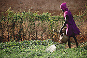 A farmer waters his vegetable garden in Kouakourou, Mali, with water he draws from the Niger river. Material World Project.