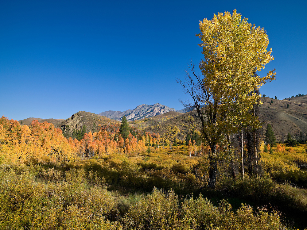 fall colors and blue sky on the first of October in the Boulder Mountain Range just north of Sun Valley in Central Idaho