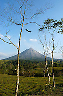 Volcano with tree and bird in Costa RIca